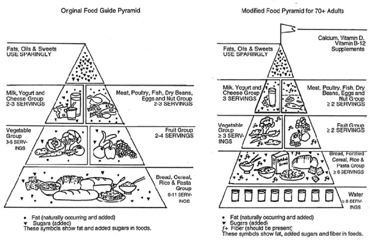 Figure 1: Original food guide pyramid and modified food pyramid for elderly